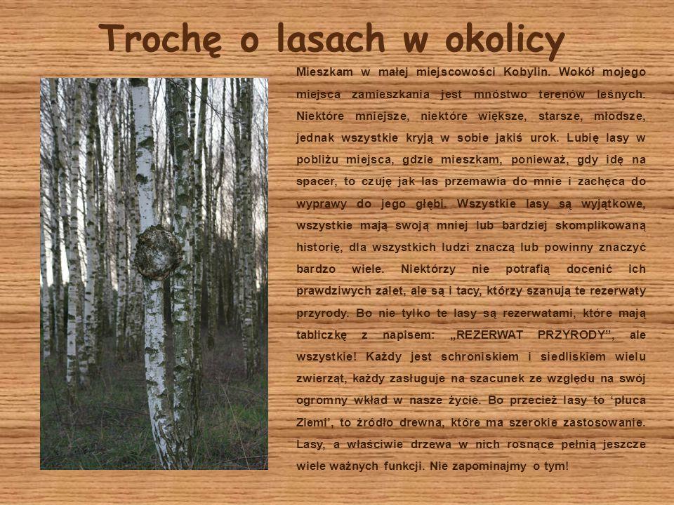 Trochę o lasach w okolicy Mieszkam w małej miejscowości Kobylin. Wokół mojego miejsca zamieszkania jest mnóstwo terenów leśnych. Niektóre mniejsze, ni