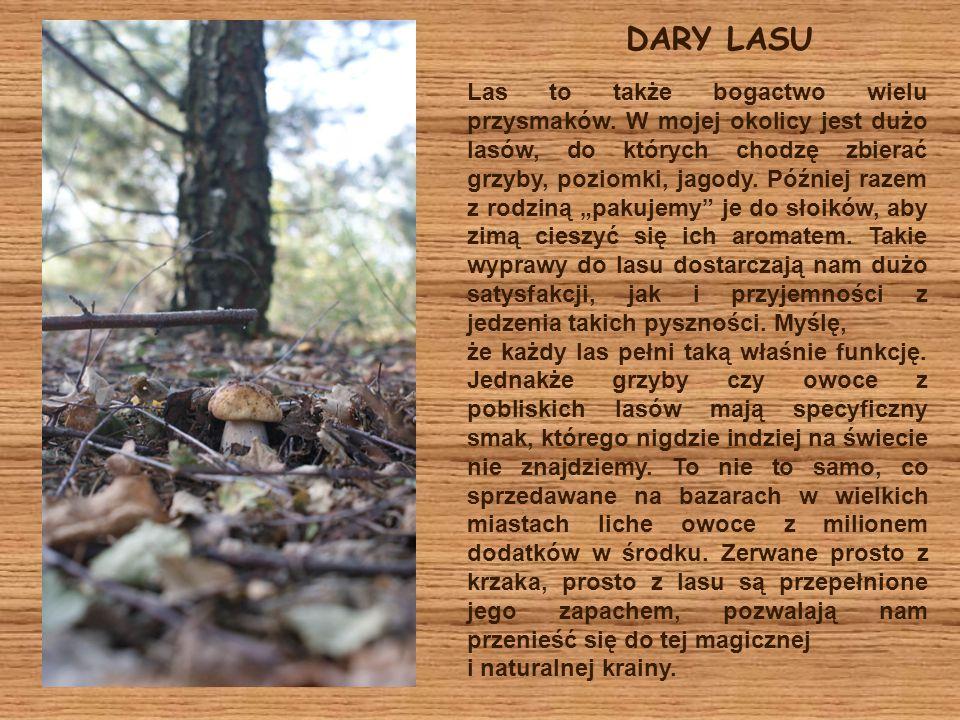 DARY LASU Las to także bogactwo wielu przysmaków. W mojej okolicy jest dużo lasów, do których chodzę zbierać grzyby, poziomki, jagody. Później razem z