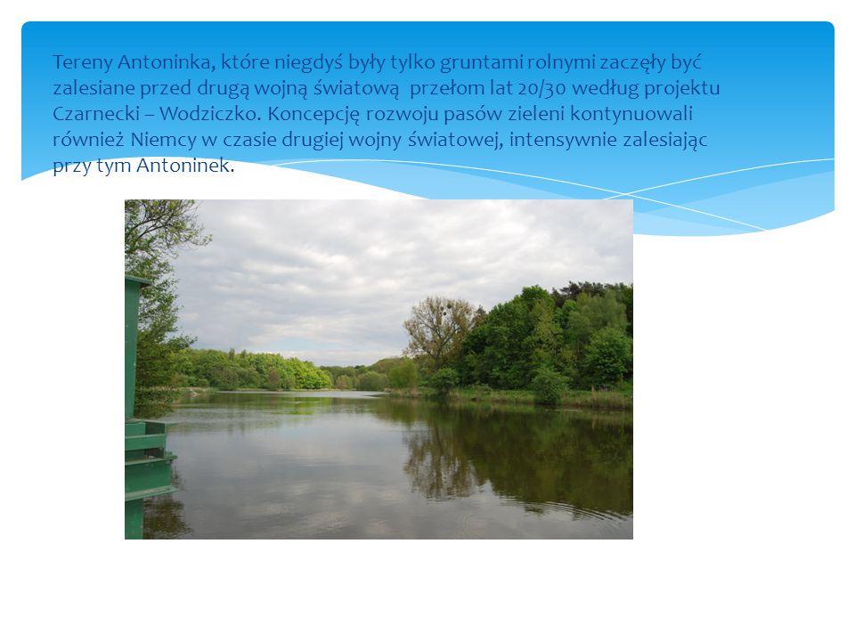Tereny Antoninka, które niegdyś były tylko gruntami rolnymi zaczęły być zalesiane przed drugą wojną światową przełom lat 20/30 według projektu Czarnec