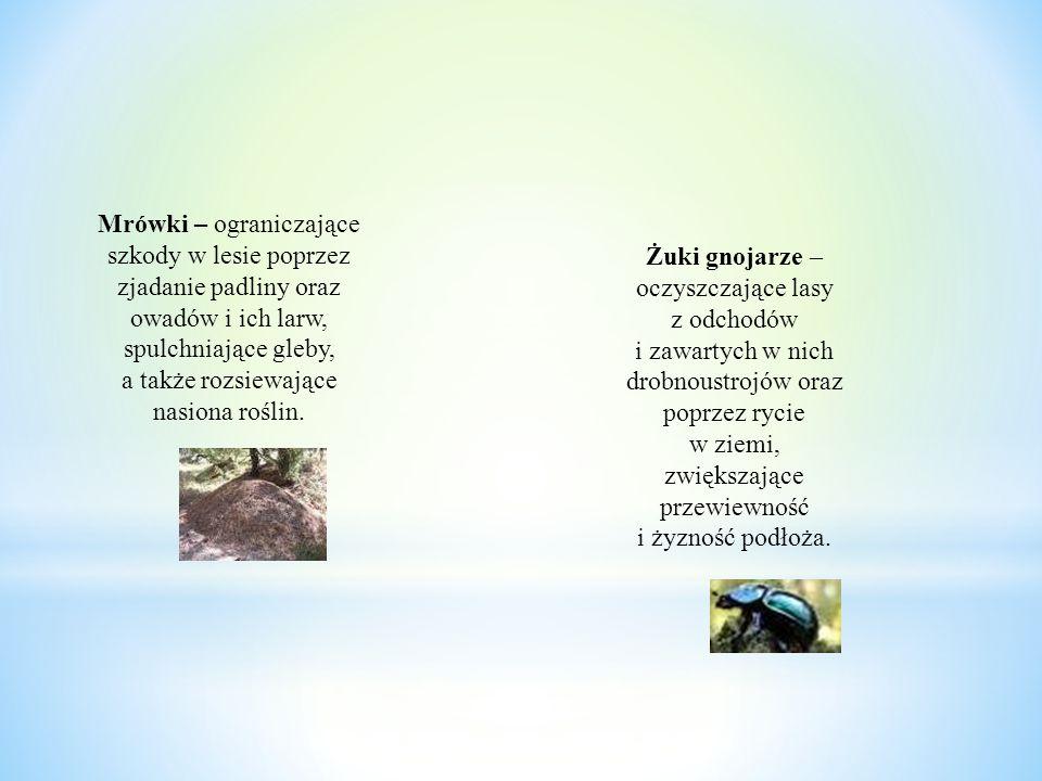Mrówki – ograniczające szkody w lesie poprzez zjadanie padliny oraz owadów i ich larw, spulchniające gleby, a także rozsiewające nasiona roślin. Żuki