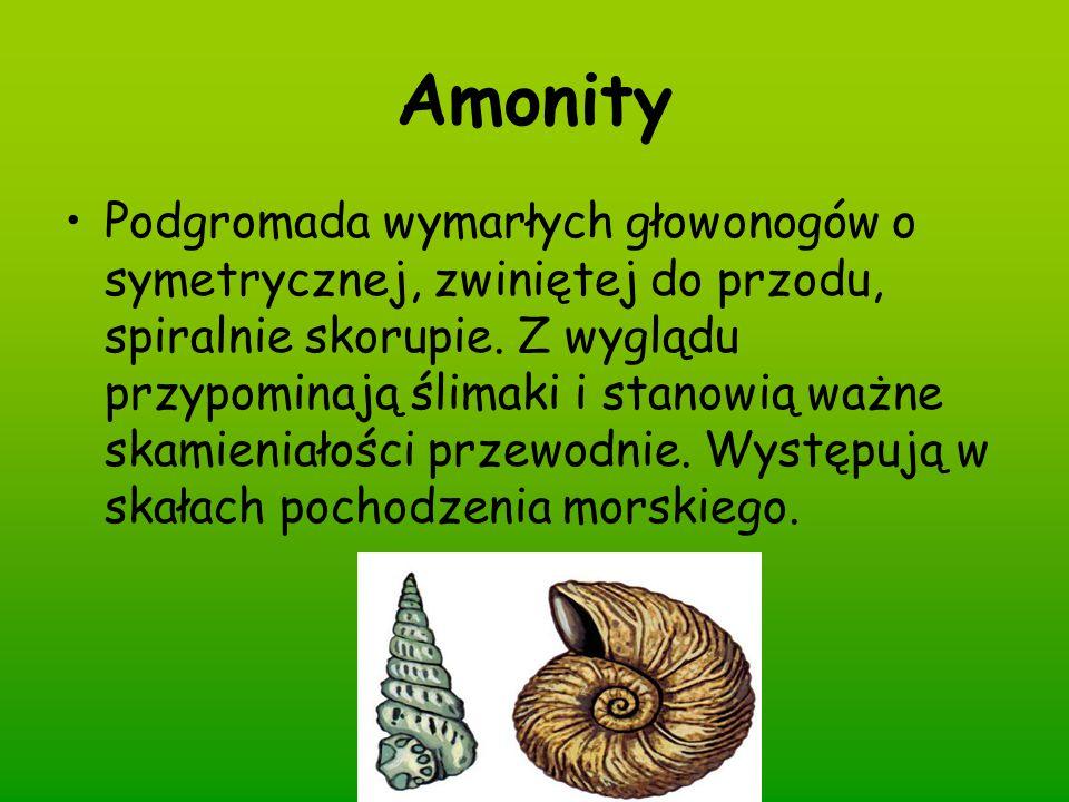 Amonity Podgromada wymarłych głowonogów o symetrycznej, zwiniętej do przodu, spiralnie skorupie. Z wyglądu przypominają ślimaki i stanowią ważne skami