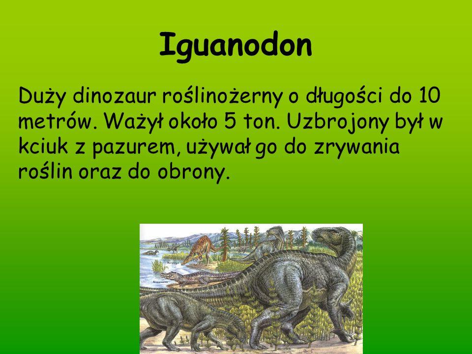 Iguanodon Duży dinozaur roślinożerny o długości do 10 metrów. Ważył około 5 ton. Uzbrojony był w kciuk z pazurem, używał go do zrywania roślin oraz do