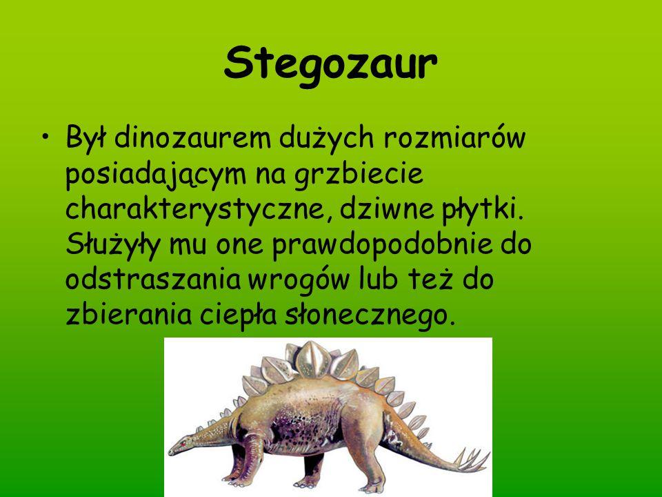Stegozaur Był dinozaurem dużych rozmiarów posiadającym na grzbiecie charakterystyczne, dziwne płytki. Służyły mu one prawdopodobnie do odstraszania wr