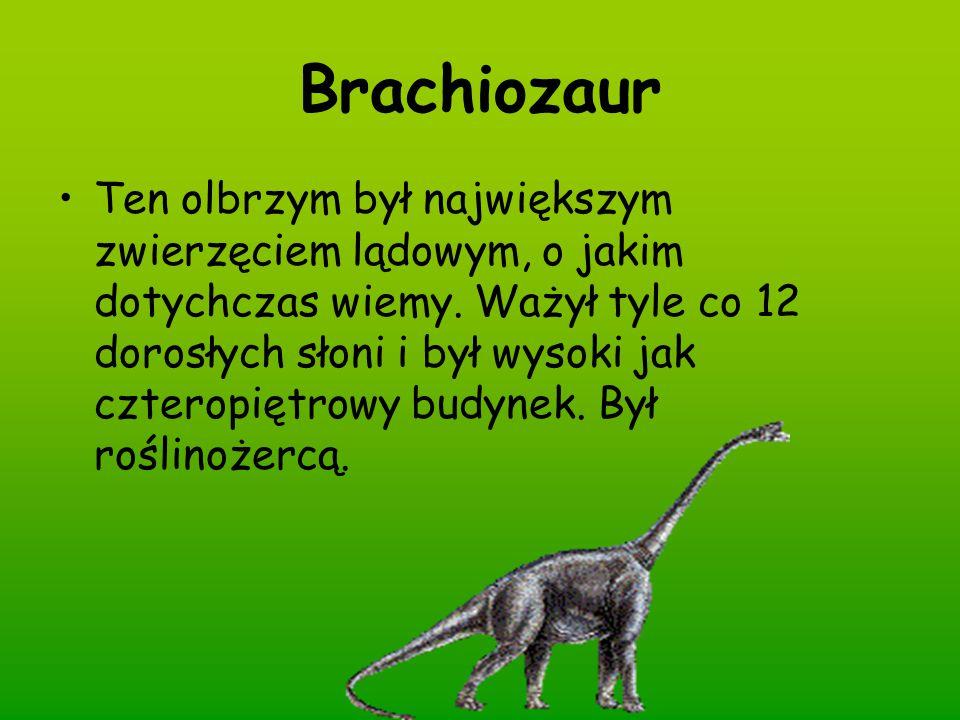 Brachiozaur Ten olbrzym był największym zwierzęciem lądowym, o jakim dotychczas wiemy. Ważył tyle co 12 dorosłych słoni i był wysoki jak czteropiętrow