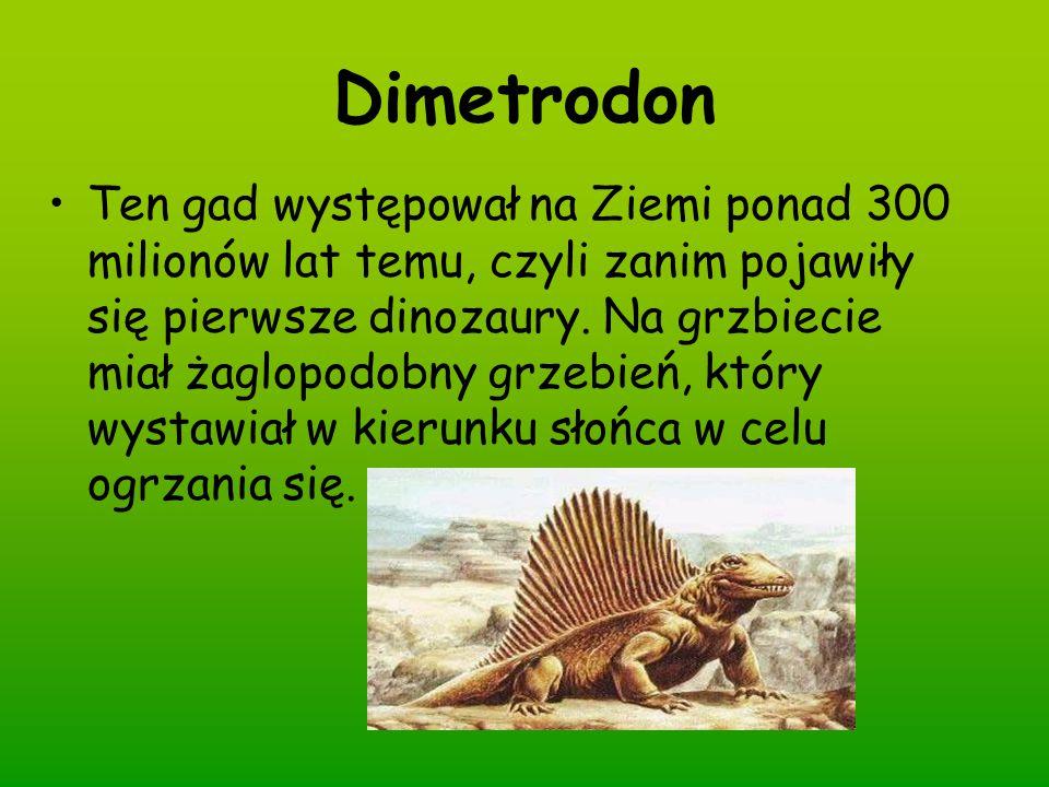 Dimetrodon Ten gad występował na Ziemi ponad 300 milionów lat temu, czyli zanim pojawiły się pierwsze dinozaury. Na grzbiecie miał żaglopodobny grzebi