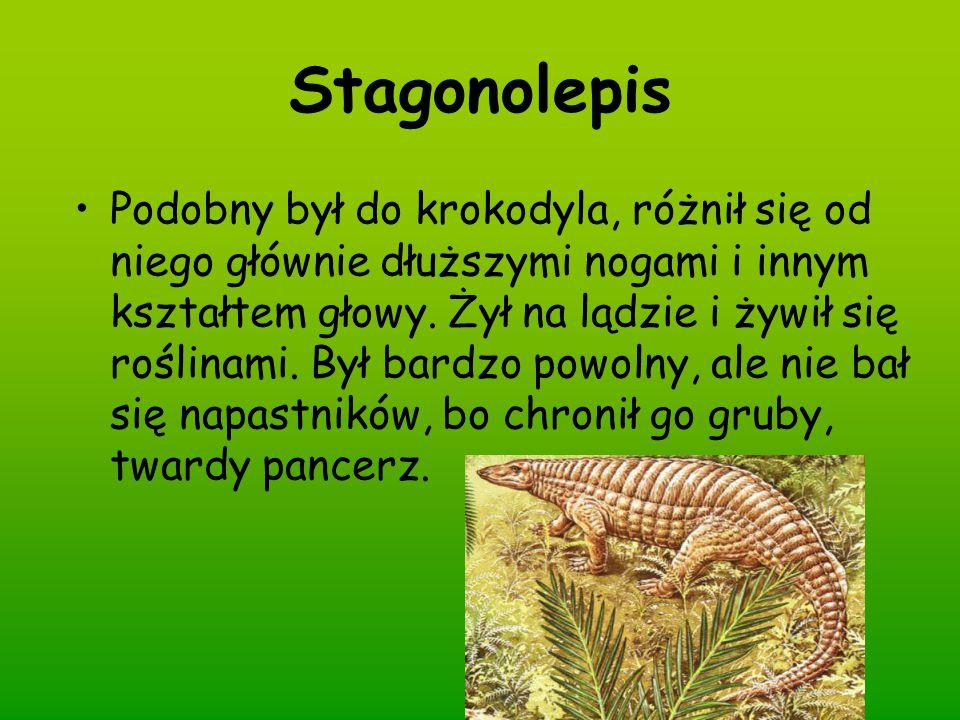Stagonolepis Podobny był do krokodyla, różnił się od niego głównie dłuższymi nogami i innym kształtem głowy. Żył na lądzie i żywił się roślinami. Był