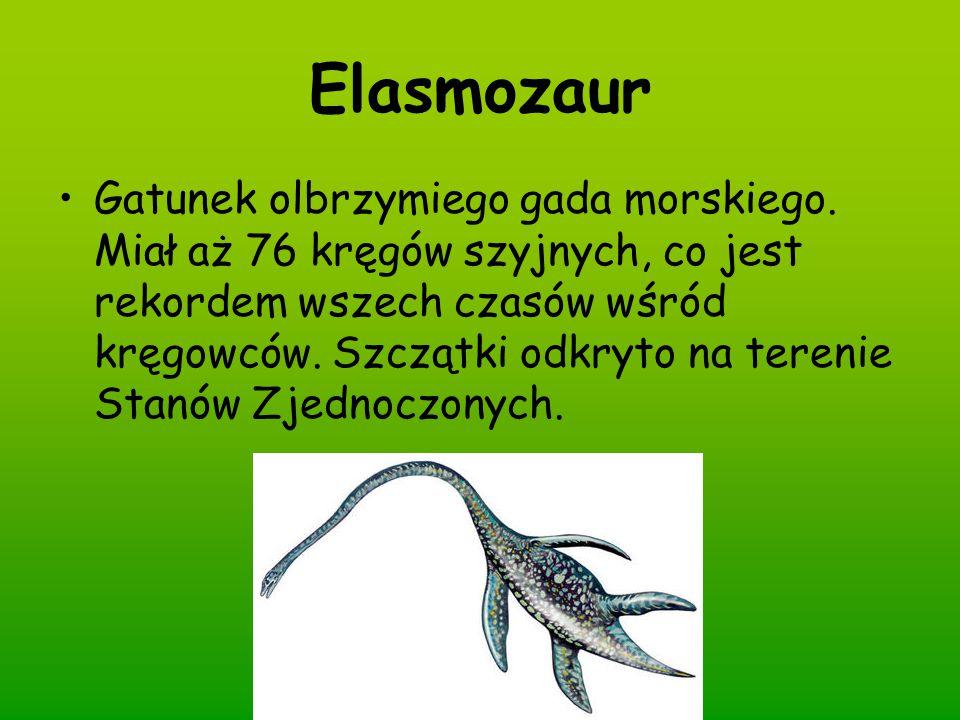 Elasmozaur Gatunek olbrzymiego gada morskiego. Miał aż 76 kręgów szyjnych, co jest rekordem wszech czasów wśród kręgowców. Szczątki odkryto na terenie