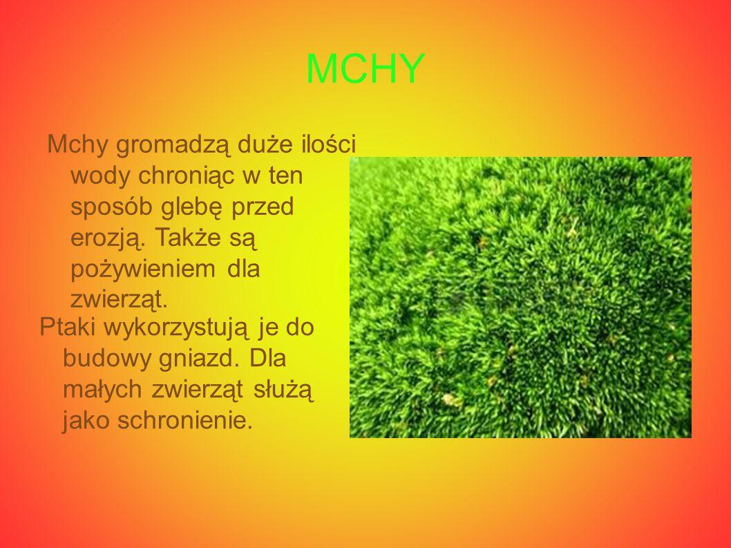 MCHY Mchy gromadzą duże ilości wody chroniąc w ten sposób glebę przed erozją. Także są pożywieniem dla zwierząt. Ptaki wykorzystują je do budowy gniaz