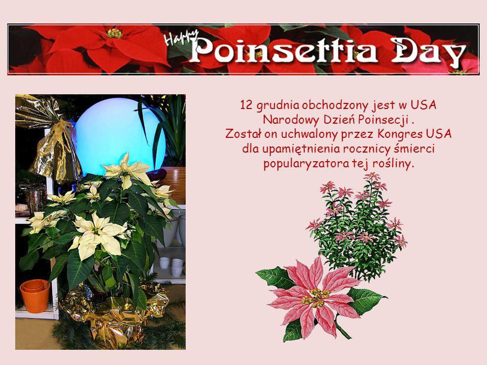 Joel Robert Poinsett - pomnik w Greenville, Południowa Carolina Powszechnie stosowaną nazwę - poinsecja – nadano roślinie na cześć pierwszego ambasado
