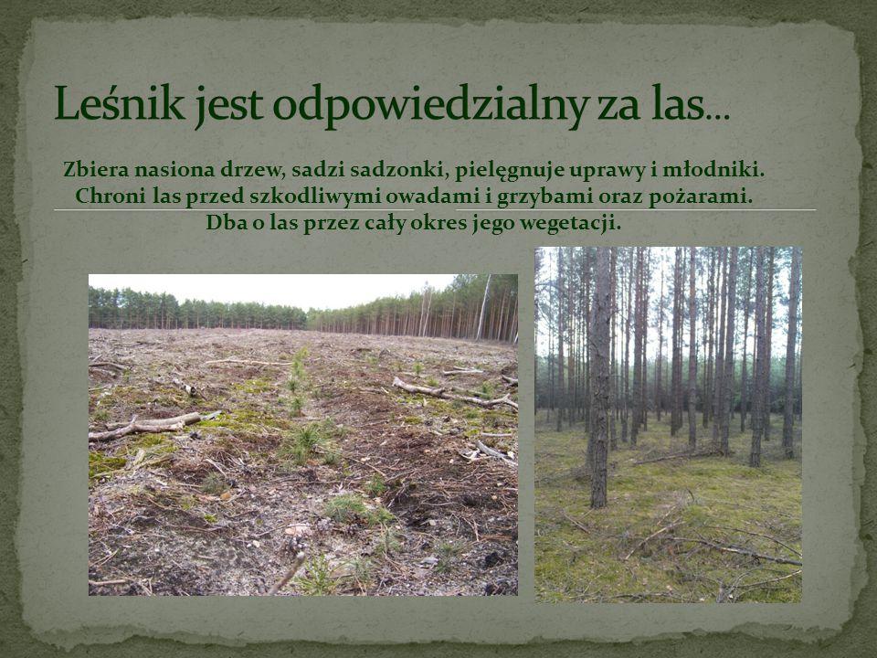Las to jego cały świat. To nie tylko jego miejsce pracy, ale także życiowa pasja. Leśnik kocha las i uczy nas szacunku do tego miejsca. Dzięki edukacj