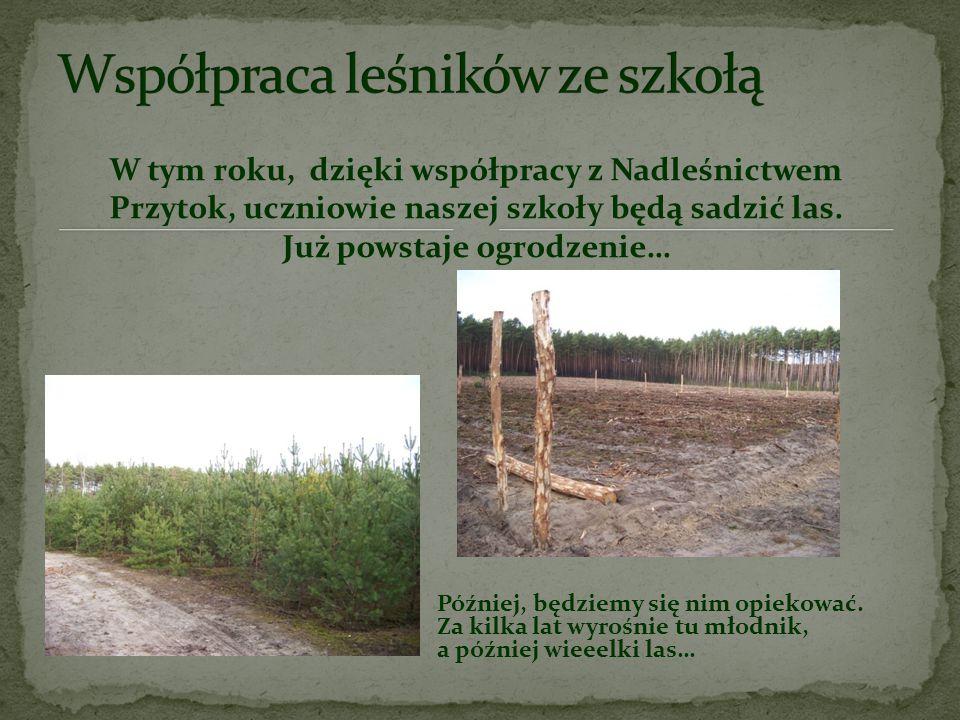 Zbiera nasiona drzew, sadzi sadzonki, pielęgnuje uprawy i młodniki. Chroni las przed szkodliwymi owadami i grzybami oraz pożarami. Dba o las przez cał