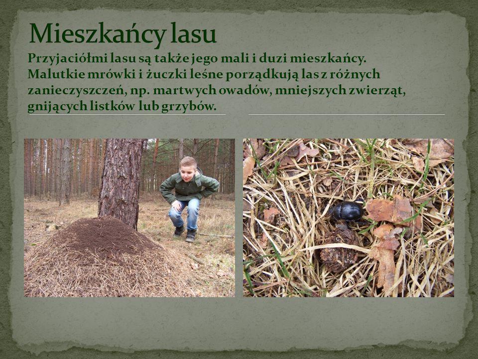 Każdy z nich na swój sposób stara się dbać o las i jego piękno Myśliwi wraz z leśnikami prowadzą wspólną gospodarkę łowiecką. Dbają o to, aby nadmiar