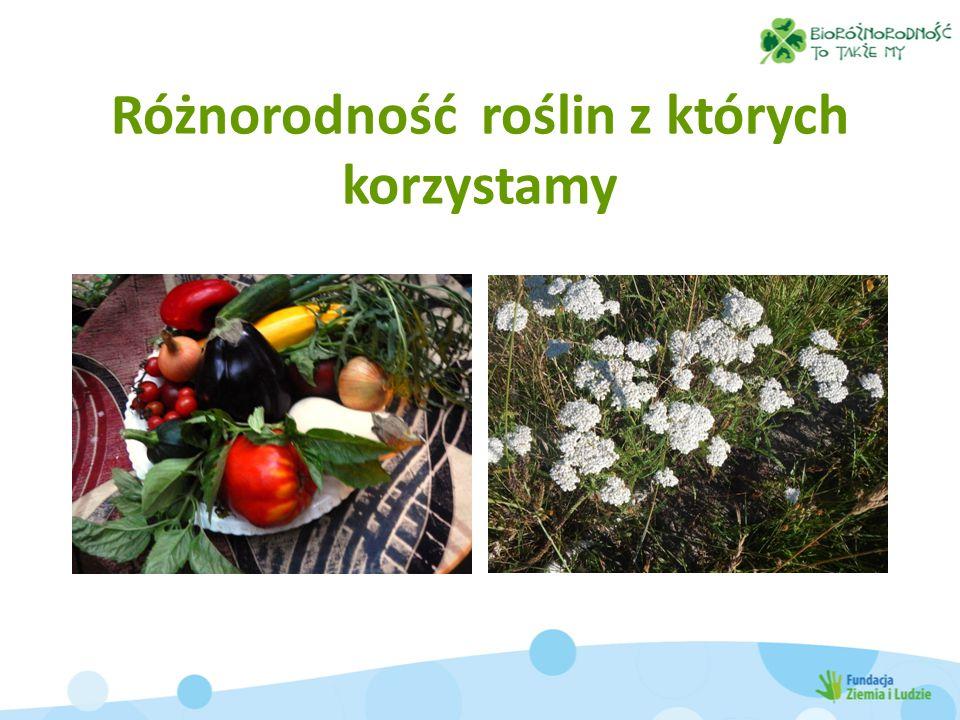 Różnorodność roślin z których korzystamy