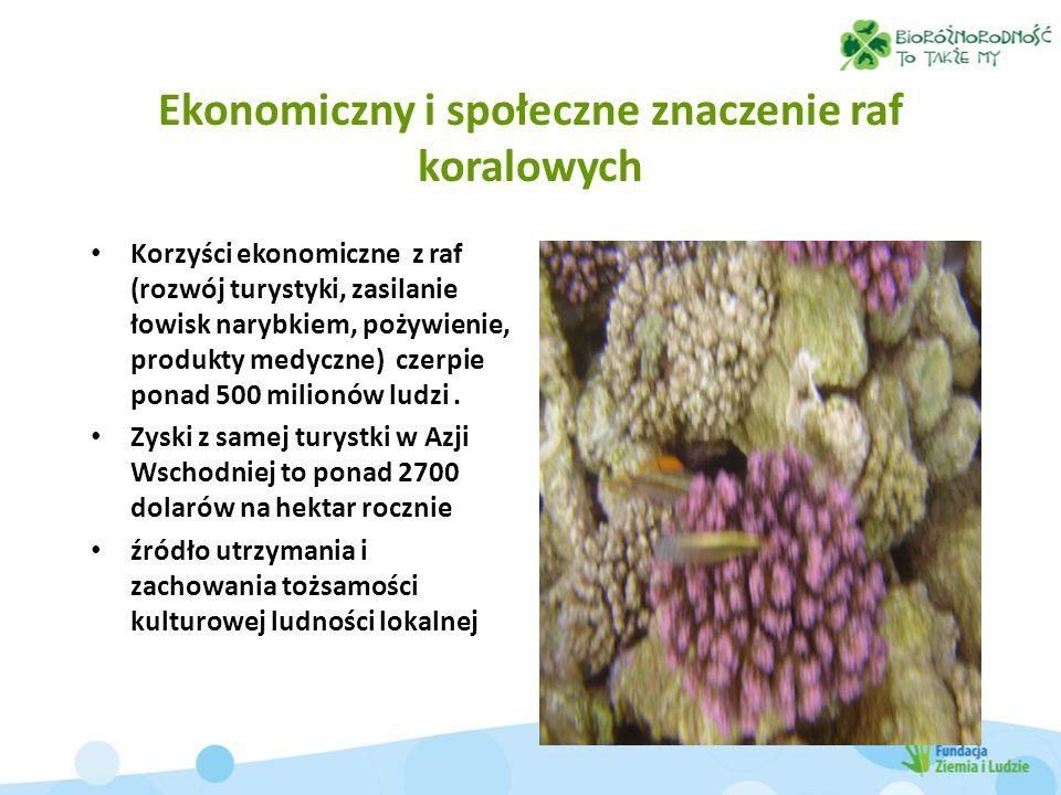 Ekonomiczny i społeczne znaczenie raf koralowych Korzyści ekonomiczne z raf (rozwój turystyki, zasilanie łowisk narybkiem, pożywienie, produkty medycz
