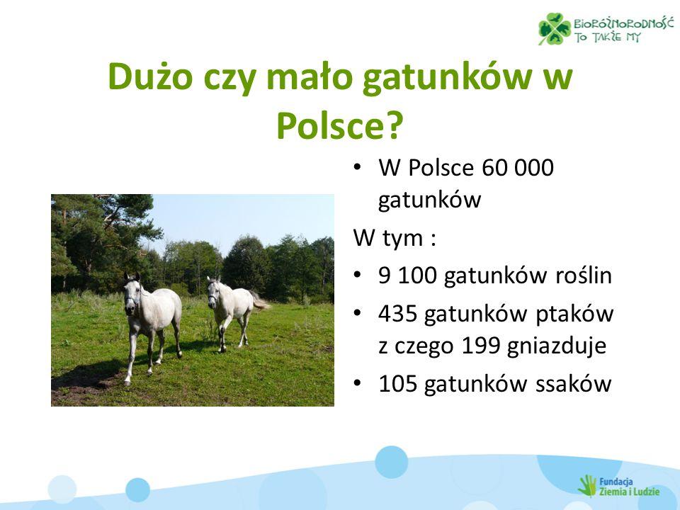 Dużo czy mało gatunków w Polsce? W Polsce 60 000 gatunków W tym : 9 100 gatunków roślin 435 gatunków ptaków z czego 199 gniazduje 105 gatunków ssaków