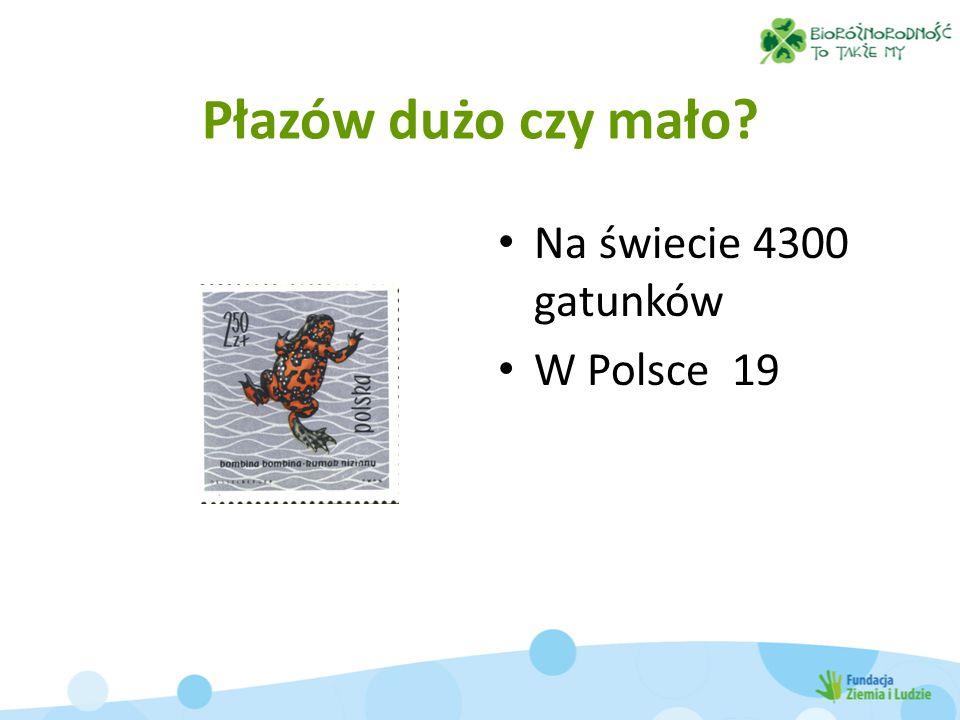 Płazów dużo czy mało? Na świecie 4300 gatunków W Polsce 19