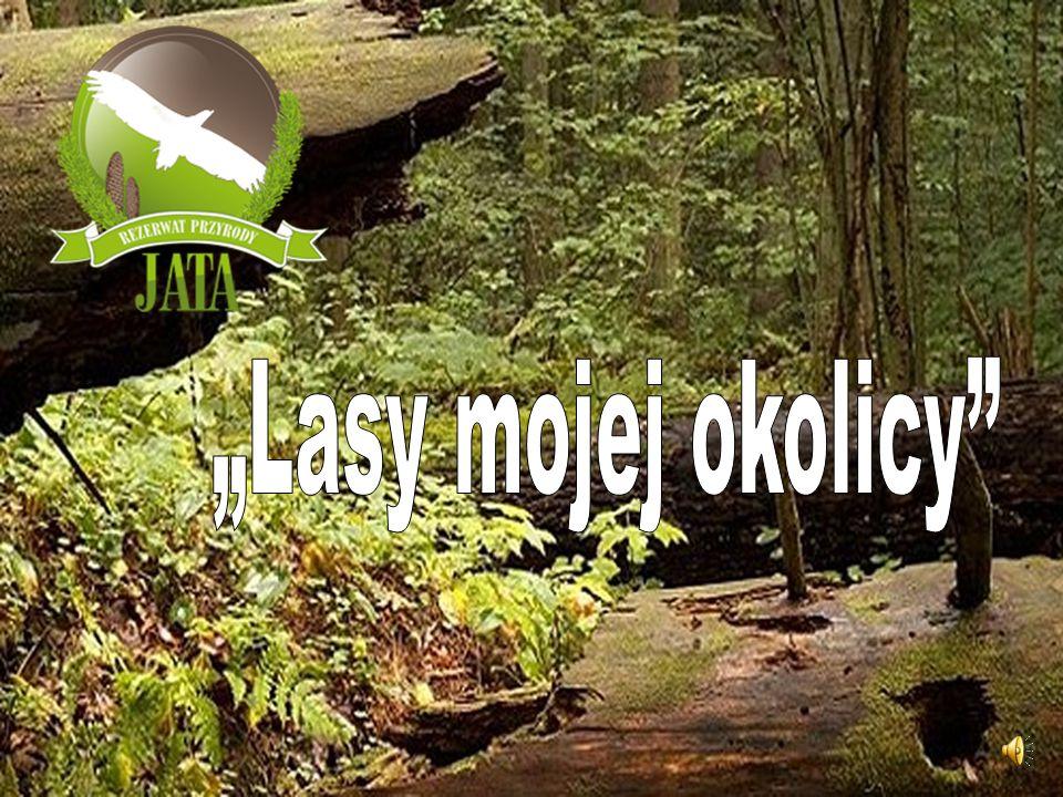 """Rezerwat Jata leży na północno – zachodnim skraju Równiny Łukowskie, w województwie lubelskim Niedaleko mojej szkoły znajduje się niezwykły las – to rezerwat przyrody """"JATA ."""