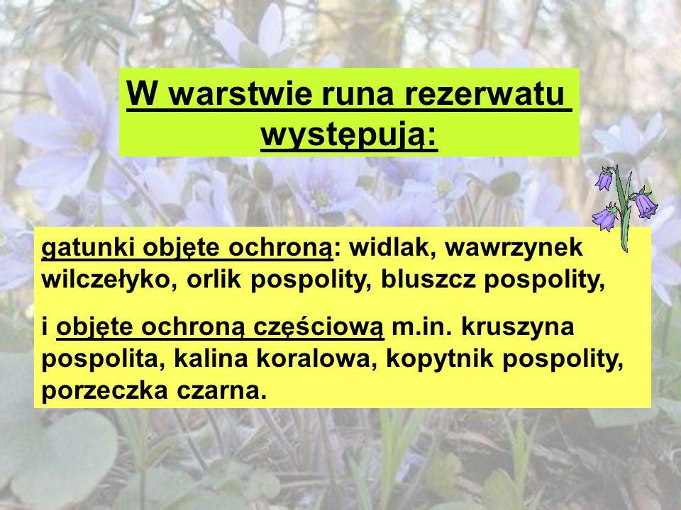 FAUNA Na terenie rezerwatu stwierdzono występowanie między innymi gatunków : Płazów: traszka grzebieniasta Gadów: zaskroniec, padalec, żmija zygzakowata