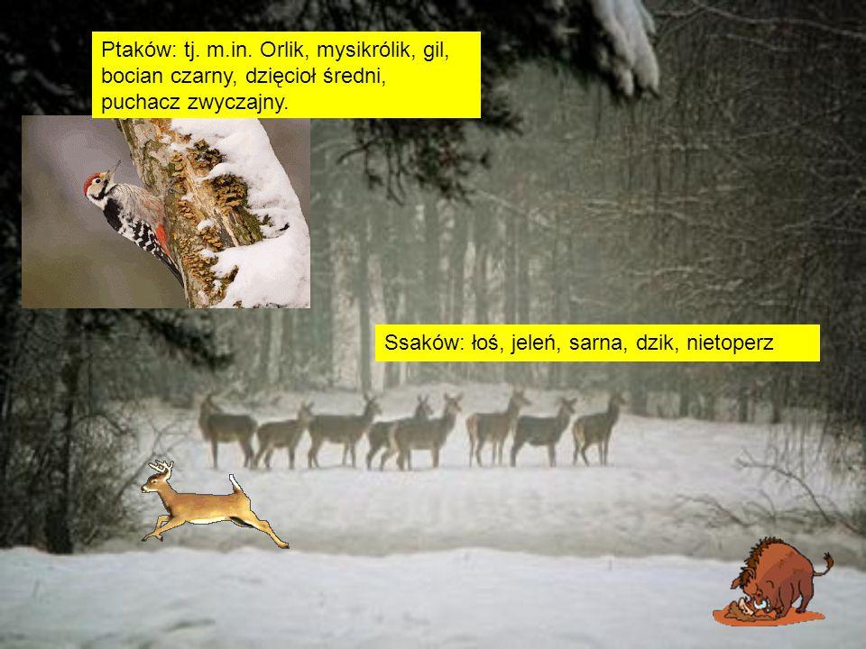 NAUKA HISTORII Pomnik pamięci ks.