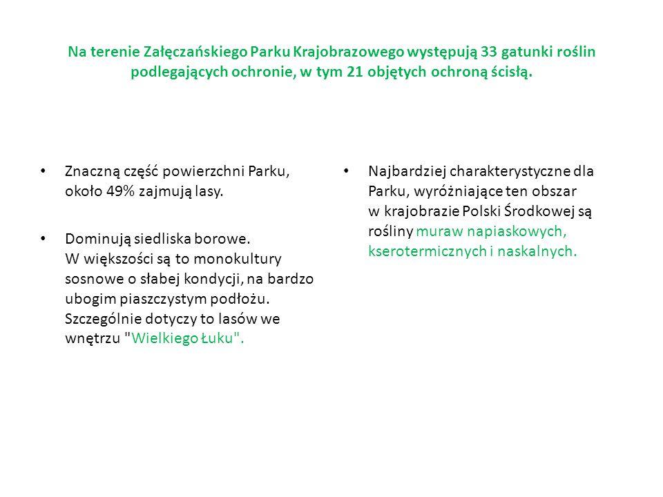 Na terenie Załęczańskiego Parku Krajobrazowego występują 33 gatunki roślin podlegających ochronie, w tym 21 objętych ochroną ścisłą. Znaczną część pow