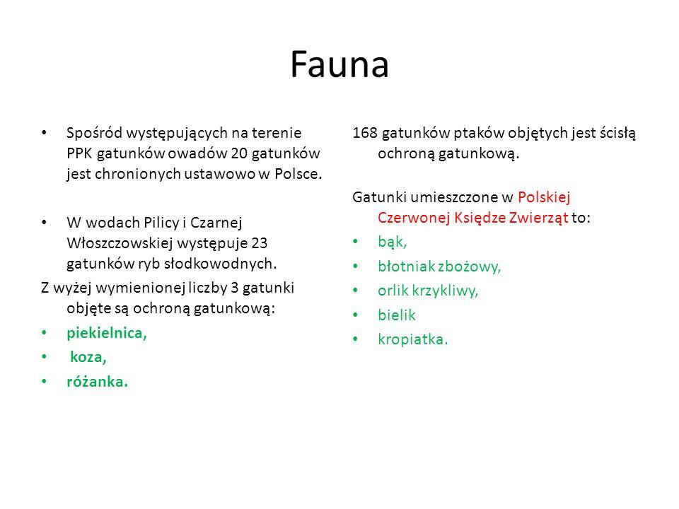 Fauna Spośród występujących na terenie PPK gatunków owadów 20 gatunków jest chronionych ustawowo w Polsce. W wodach Pilicy i Czarnej Włoszczowskiej wy
