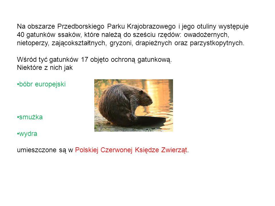 Na obszarze Przedborskiego Parku Krajobrazowego i jego otuliny występuje 40 gatunków ssaków, które należą do sześciu rzędów: owadożernych, nietoperzy,