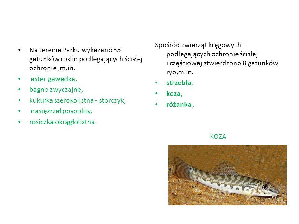 Na terenie Parku wykazano 35 gatunków roślin podlegających ścisłej ochronie,m.in. aster gawędka, bagno zwyczajne, kukułka szerokolistna - storczyk, na