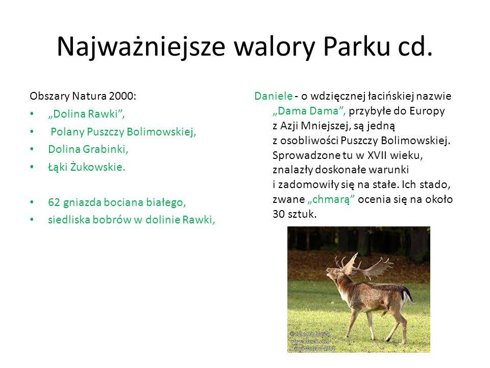 """Najważniejsze walory Parku cd. Obszary Natura 2000: """"Dolina Rawki"""", Polany Puszczy Bolimowskiej, Dolina Grabinki, Łąki Żukowskie. 62 gniazda bociana b"""