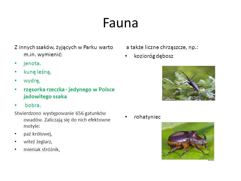 Fauna Z innych ssaków, żyjących w Parku warto m.in. wymienić: jenota, kunę leśną, wydrę, rzęsorka rzeczka - jedynego w Polsce jadowitego ssaka bobra.