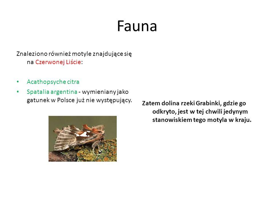 Fauna Znaleziono również motyle znajdujące się na Czerwonej Liście: Acathopsyche citra Spatalia argentina - wymieniany jako gatunek w Polsce już nie w
