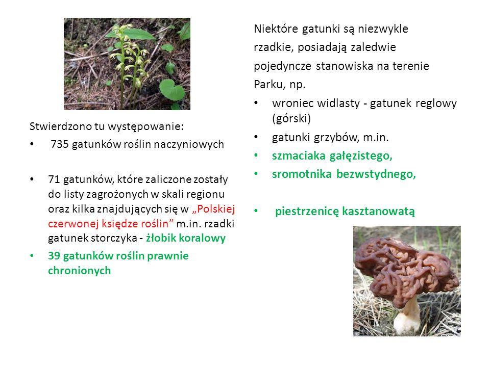 Stwierdzono tu występowanie: 735 gatunków roślin naczyniowych 71 gatunków, które zaliczone zostały do listy zagrożonych w skali regionu oraz kilka zna