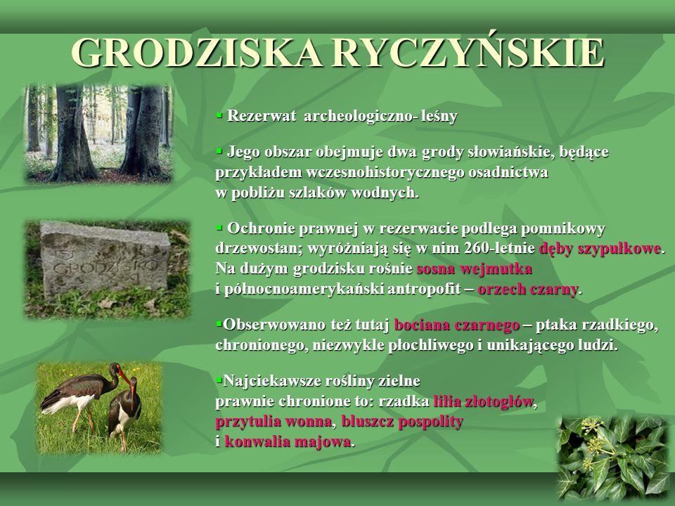 GRODZISKA RYCZYŃSKIE  Rezerwat archeologiczno- leśny  Jego obszar obejmuje dwa grody słowiańskie, będące przykładem wczesnohistorycznego osadnictwa