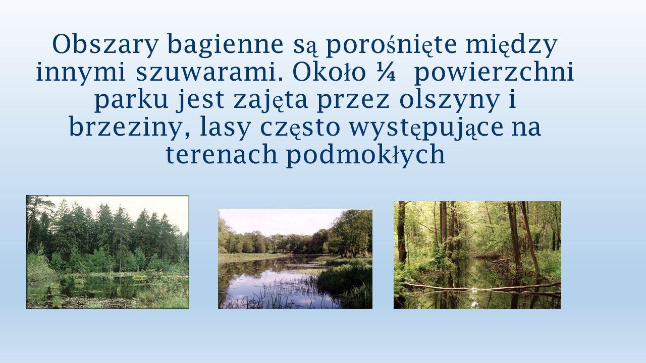 Bagna Biebrzańskie są uznawane za jedną z najważniejszych w kraju i w Europie Środkowej ostoi ptaków wodno-błotnych.