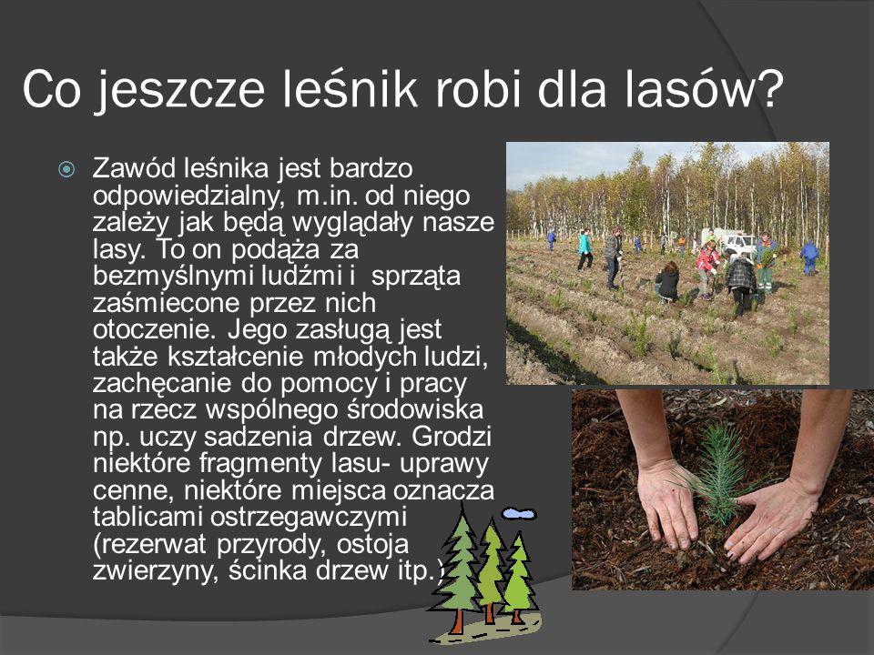 Co jeszcze leśnik robi dla lasów. Zawód leśnika jest bardzo odpowiedzialny, m.in.
