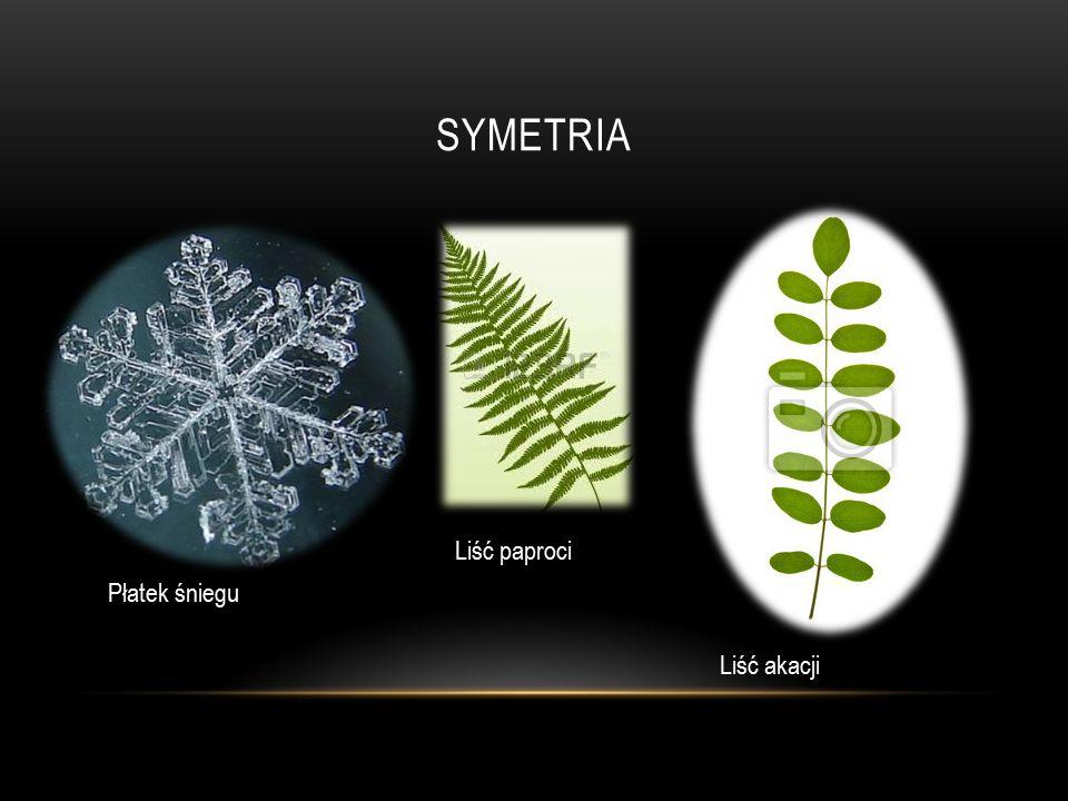 SYMETRIA Liść akacji Liść paproci Płatek śniegu