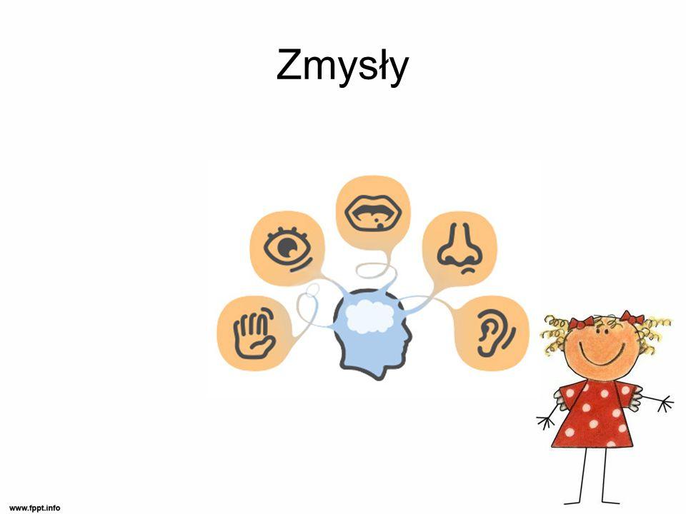 Bazowe systemy zmysłowe system dotykowy, przedsionkowy i proprioceptywny (czucia głębokiego) to najwcześniej dojrzewające systemy zmysłowe w procesie prawidłowego rozwoju dziecka.