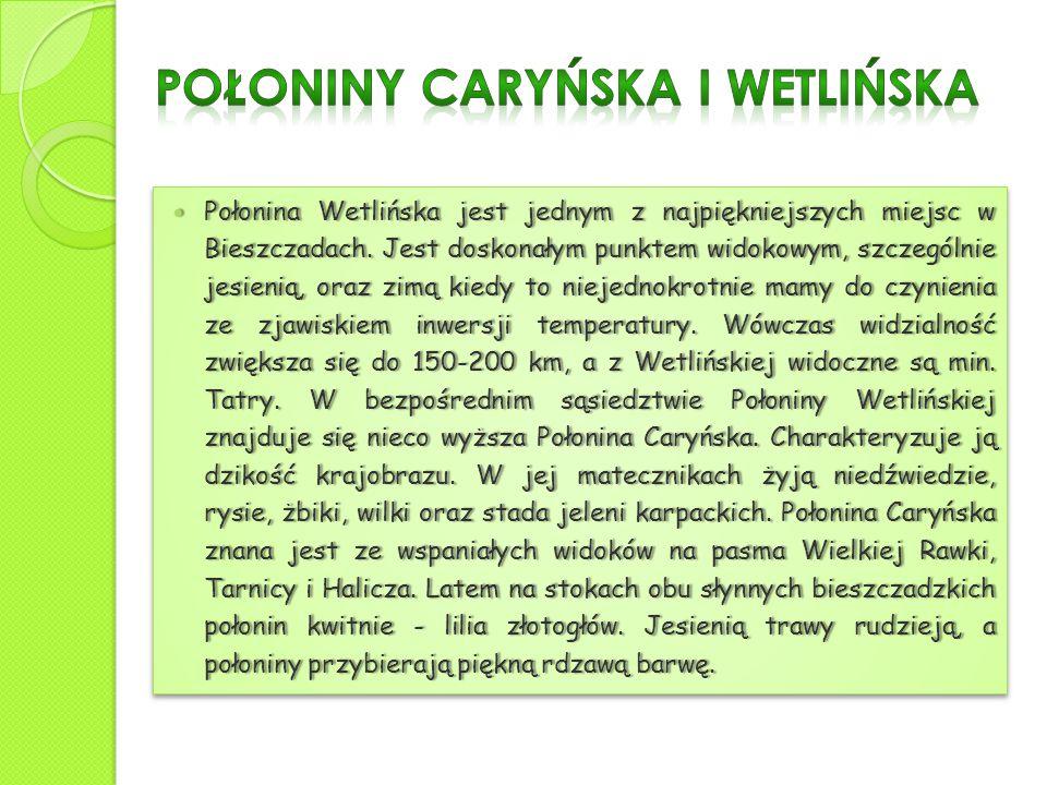 Połonina Wetlińska jest jednym z najpiękniejszych miejsc w Bieszczadach. Jest doskonałym punktem widokowym, szczególnie jesienią, oraz zimą kiedy to n