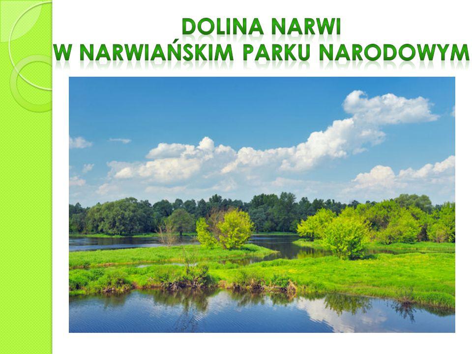 Puszcza Białowieska to przede wszystkim piękny las, który rozciąga się na powierzchni 150 000 hektarów.