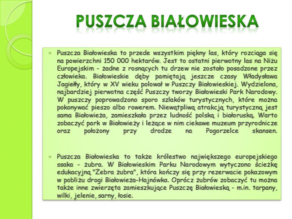 Puszcza Białowieska to przede wszystkim piękny las, który rozciąga się na powierzchni 150 000 hektarów. Jest to ostatni pierwotny las na Niżu Europejs