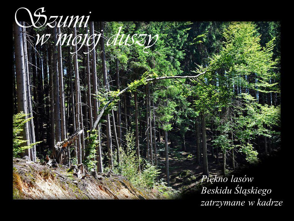 Szumi w mojej duszy Piękno lasów Beskidu Śląskiego zatrzymane w kadrze