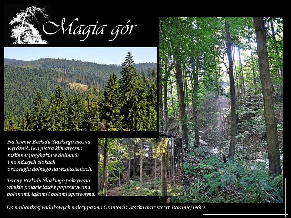 Magia gór Na terenie Beskidu Śląskiego można wyróżnić dwa piętra klimatyczno- roślinne: pogórskie w dolinach i na niższych stokach oraz regla dolnego