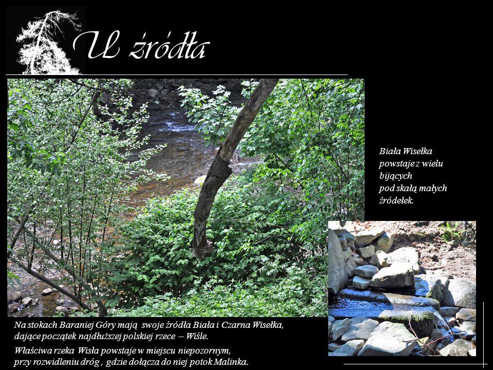 U zrodla Biała Wisełka powstaje z wielu bijących pod skałą małych źródełek. Na stokach Baraniej Góry mają swoje źródła Biała i Czarna Wisełka, dające