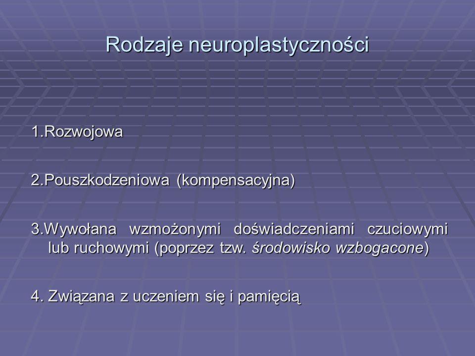 Rodzaje neuroplastyczności 1.Rozwojowa 2.Pouszkodzeniowa (kompensacyjna) 3.Wywołana wzmożonymi doświadczeniami czuciowymi lub ruchowymi (poprzez tzw.