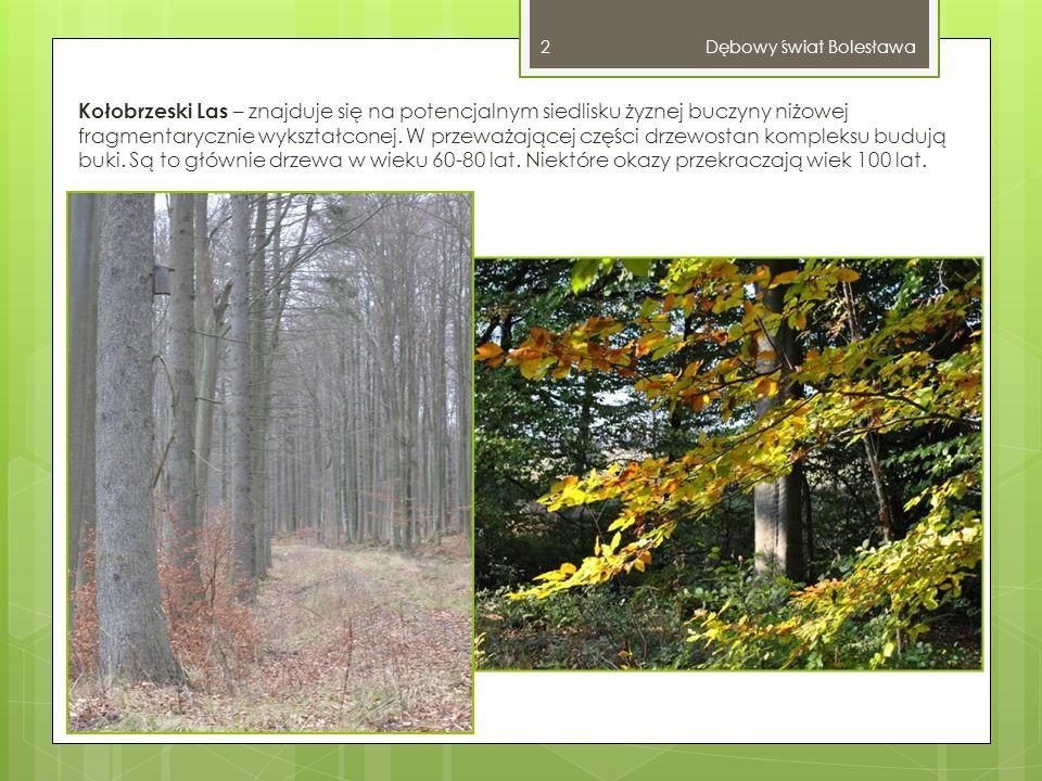 Innymi gatunkami występującymi w obrębie kompleksu są: dąb, świerk i brzoza, a w miejscach podmokłych olcha i jesion.