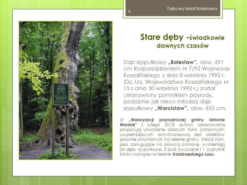 """Dębowy świat Bolesława 7 Kompleks leśny Kołobrzeski Las znajduje się na terenie Obszaru Chronionego Krajobrazu """"Koszaliński Pas Nadmorski – powołanego w 1975 r."""