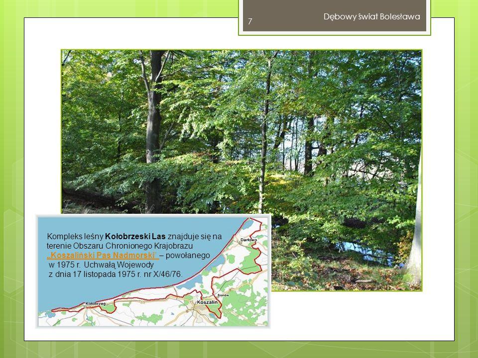 Dębowy świat Bolesława 8 Przy okazji grzybobrania możemy podziwiać piękno lasów, cieszyć się zdrowym, świeżym powietrzem oraz bez ograniczeń korzystać z pozostałych darów leśnego runa.
