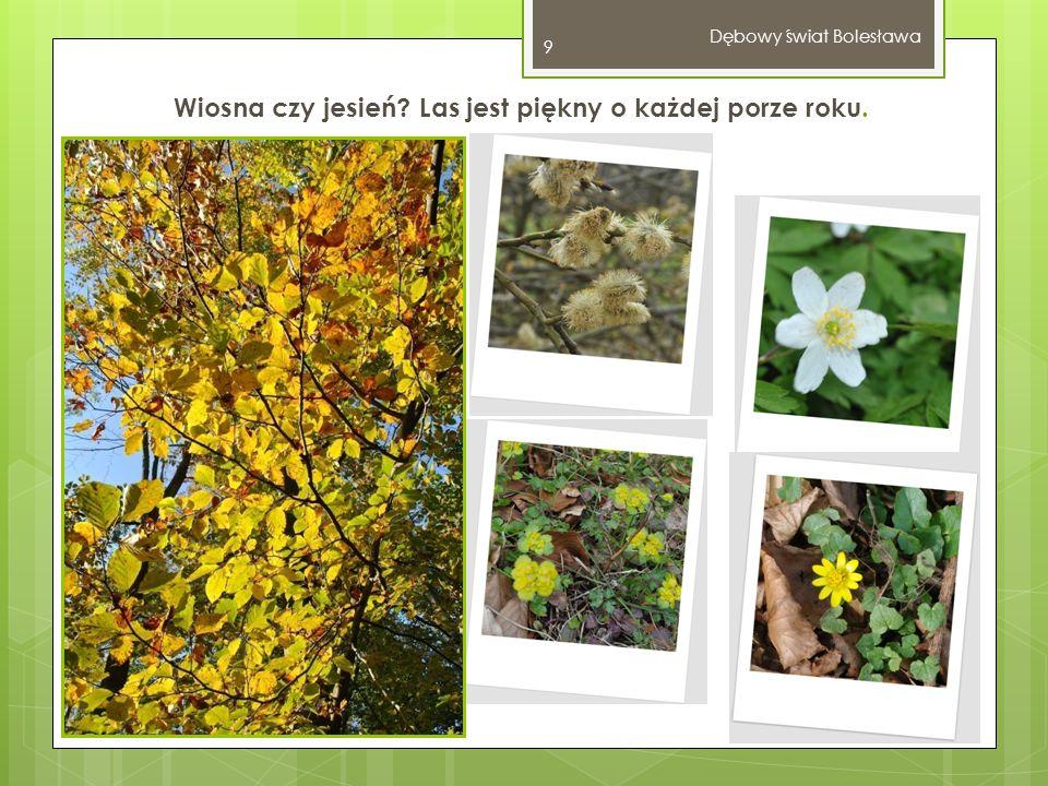 Wiosna czy jesień? Las jest piękny o każdej porze roku. Dębowy świat Bolesława 9