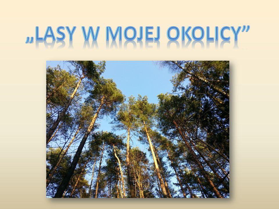 PIELGRZYMOWICKIE LASY Na terenie Pielgrzymowic lasy należą do Nadleśnictwa Kobiór i Nadleśnictwa Ustroń.