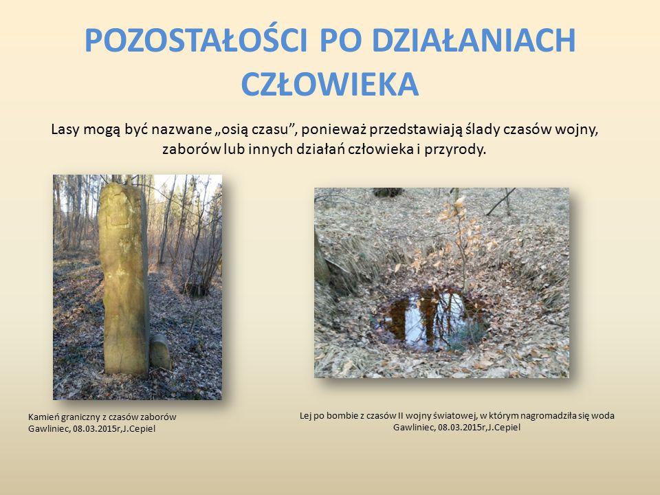 """POZOSTAŁOŚCI PO DZIAŁANIACH CZŁOWIEKA Lasy mogą być nazwane """"osią czasu"""", ponieważ przedstawiają ślady czasów wojny, zaborów lub innych działań człowi"""