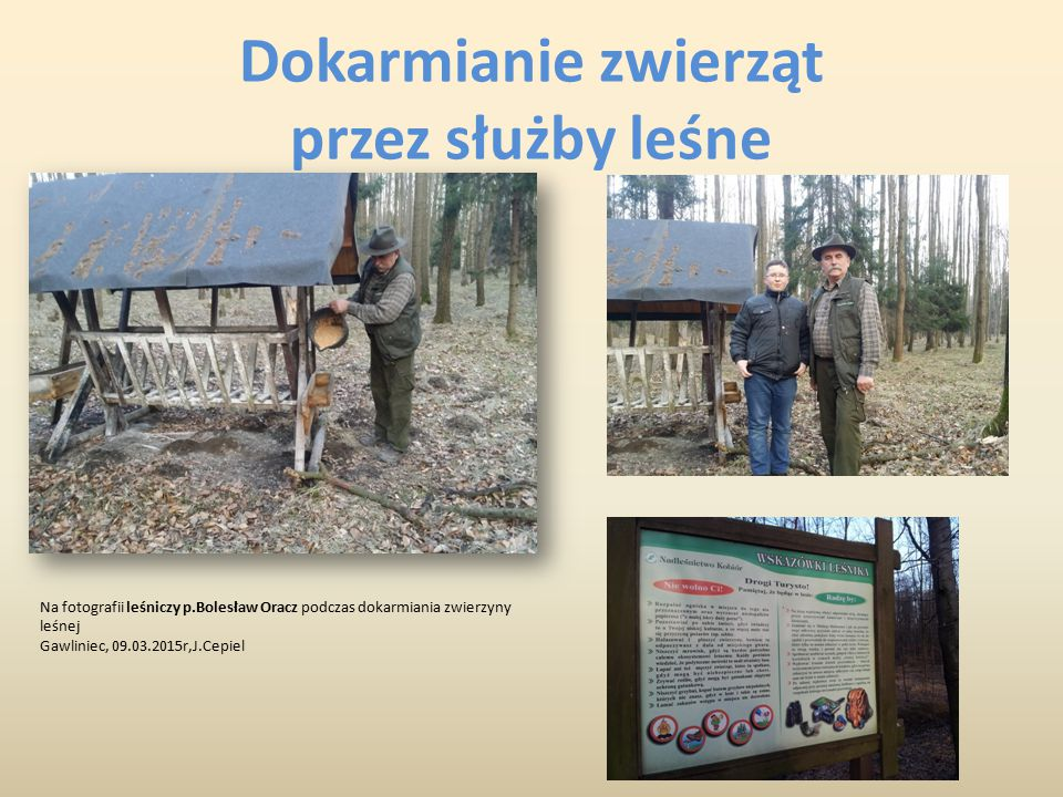 """Oto kilka zdjęć z mojej kolekcji: """"las Gawliniec Gawliniec, 08.03.2015r,J.Cepiel"""